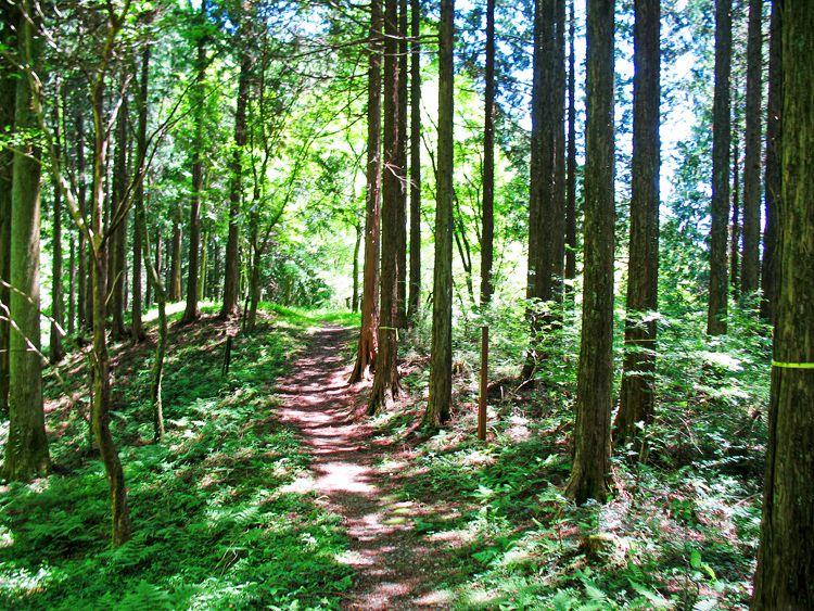 お玉が池への樹林の道