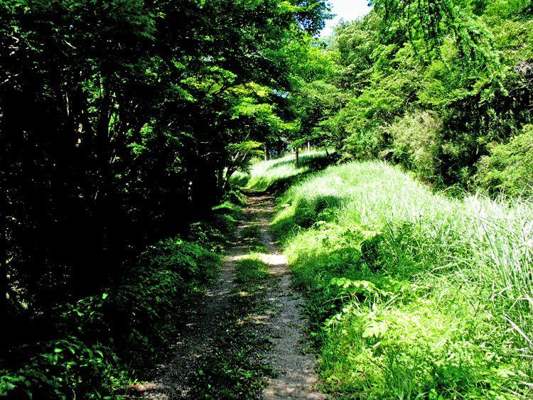 湯坂路の緩やかな尾根道
