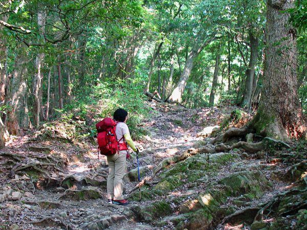 琵琶滝から2号路への登り