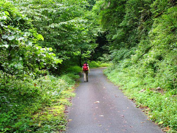 養沢川沿いの林道御岳線を歩く