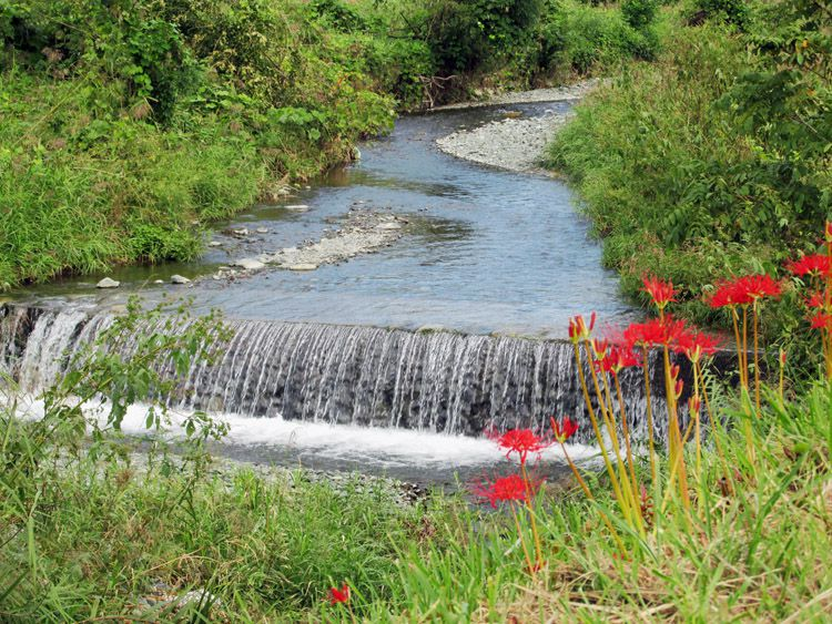 四十八瀬川の流れと川辺に咲く彼岸花