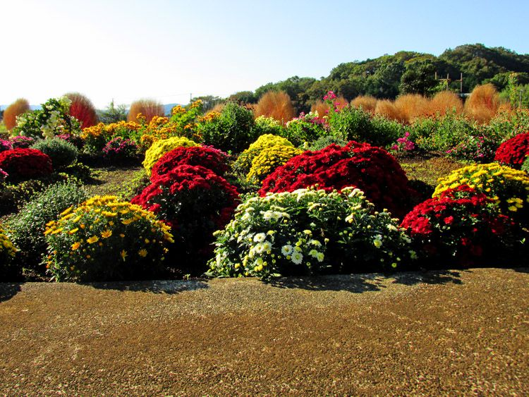 比々多神社前の花畑